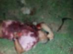 Terduga Santet, Warga Madura Dibantai di Depan Istrinya